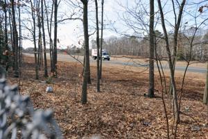 Parkway Trees5310645.jpg