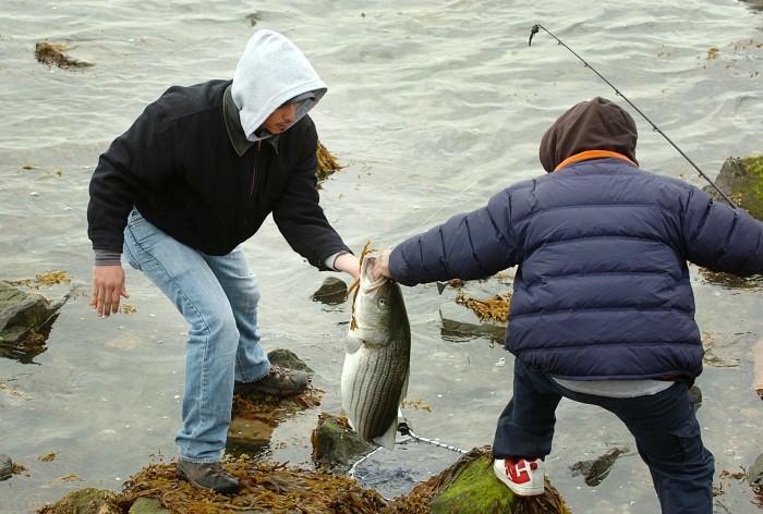 fish advisories