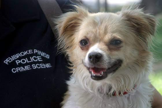 Police help lost pets along journey back home