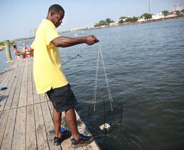 New jersey blue crabs not measuring up atlantic county for Blue fishing nj