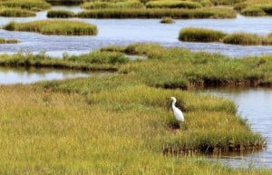 Tidal tales: Salt marsh