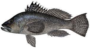 black sea bass icon