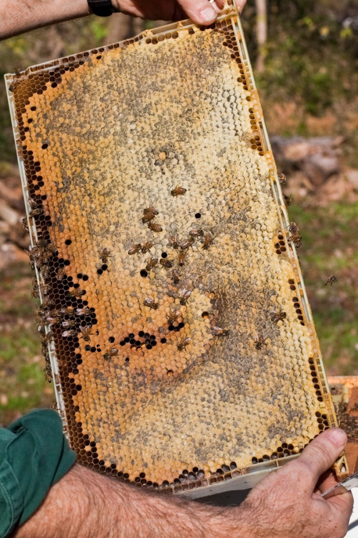 beekeeping112924801.jpg