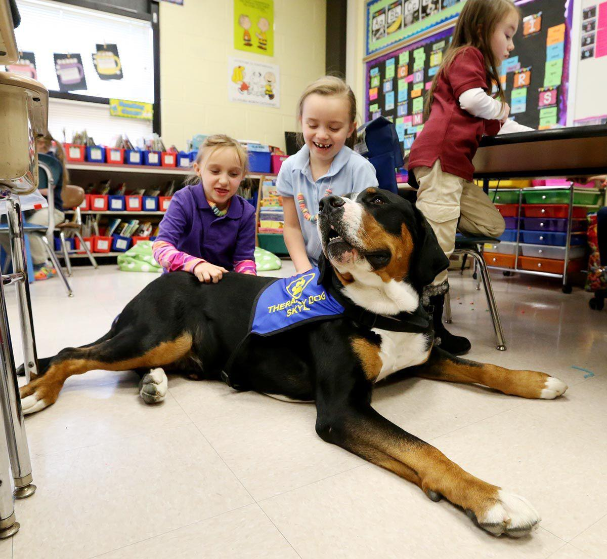 Therapy Dog In Classroom For Sale