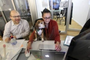 Bring your dog to work, just follow a few simple rules