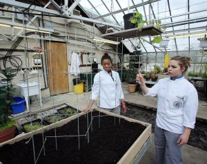 GREEN EDUCATION: Akeema Telemaque, 21 of Willingboro, left, and Somer Gegeckas, 19, of Mount Royal, right, work in the greenhouse at Atlantic Cape Community College. - Edward Lea
