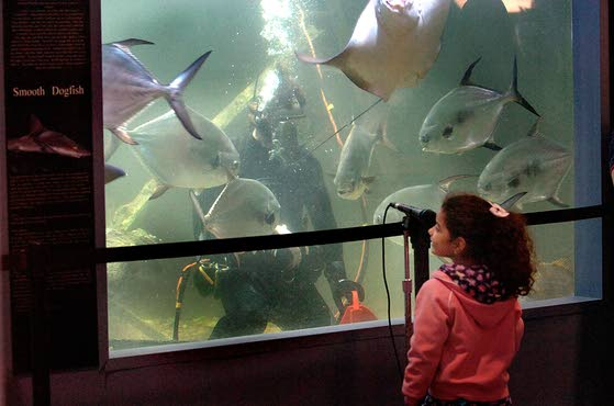 Holiday event at AC Aquarium and other events At The Shore Today