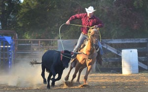 Butch Days Rodeo: Travis Dase takes the lead roping while practicing team roping at his dad's Bridgeton ranch. Monday September 30 2013 Butch Dase and his son Travis Dase are competing in the Team Roping competition at the Atlantic City Boardwalk Rodeo this weekend. (The Press of Atlantic City / Ben Fogletto) - Ben Fogletto