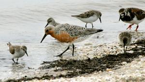 Birds of South Jersey