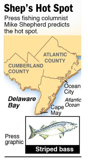 Shep Hot Spot striped bass Delaware Bay