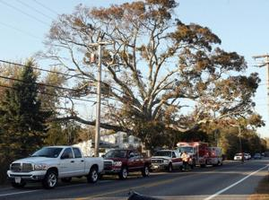 Tree Accident81004120.jpg
