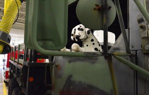 Leveraging The Storm: A plush stuffed Dalmatian sits in the cab of the newly acquired Army surplus truck that has been refurbished after stints in Iraq and Kuwait at the Brigantine Fire Company. Friday January 4 2013 (The Press of Atlantic City / Ben Fogletto)  - Ben Fogletto