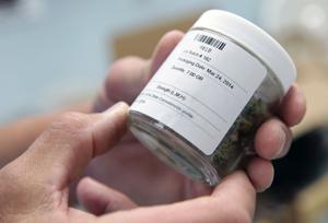 Marijuana six-months on