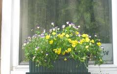 Making your window box that much more beautiful