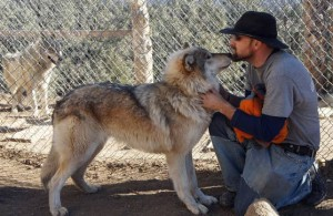 test4Pets: Project gives vets, wolf-dogs a second chance