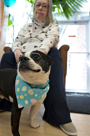 ucmc a2 therapy dog