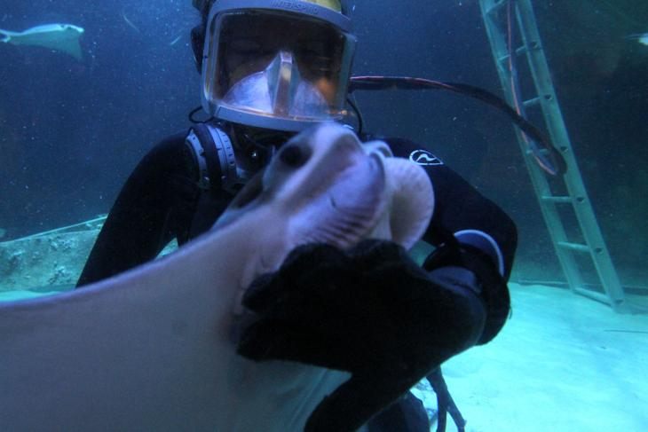 Swimming With The Fishes For A Living Press Of Atlantic