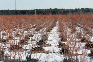 Cold Temps for Crops