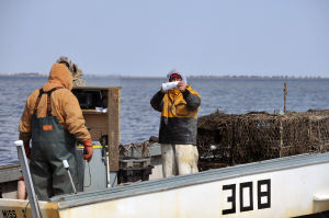 """GHOSTPOT: John Reese, left, watches fellow crabber Bob Dinkelacker, both of Galloway Township, photograph a identification tag, Wednesday Mar. 13, 2013, aboard the """"Miss Ginny"""", after finding a ghost pots in Great Bay. A NOAA grant fund the recovery of unused crab pots that litter the bay. (The Press of Atlantic City/Staff Photo by Michael Ein)  - Michael Ein"""