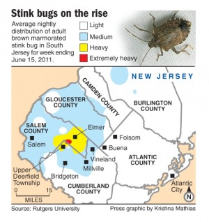 NJ stink bug map