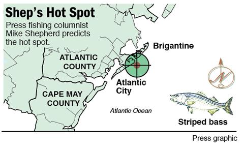 striped bass atlantic city