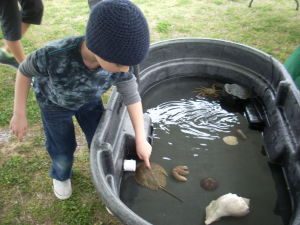 Cape May County Earth Day 2: Elijah Weiler, 5, of Egg Harbor Township, pets a horseshoe crab in a touch tank at the Cape May County Earth Day Celebration on Saturday morning at the Cape May County Park & Zoo.  - Photo by Brian Ianieri