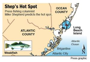 Shep's Hot Spot weakfish Beach Haven
