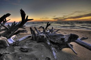 This Week in the Arts: Christine Peck displays photography at Co-op gallery