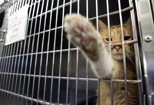 Atlantic County shelter's free day finds pets homes