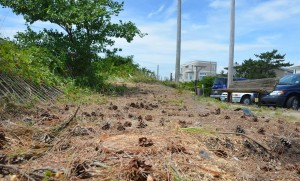 brigantine dune trees cut down
