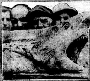 100 years ago, 'man-eater' terrorized the Jersey Shore
