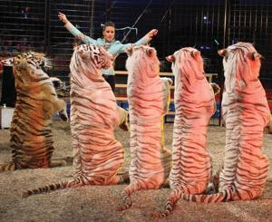 At The Shore Today: Cole Bros. Circus comes to Vineland for two days of performances