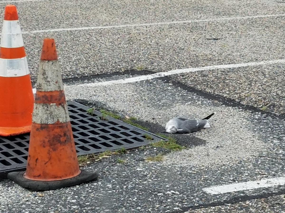 seagulls (6).jpg