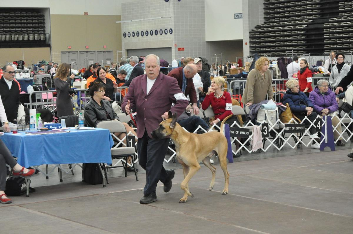 Wildwood Kennel Club Dog Show