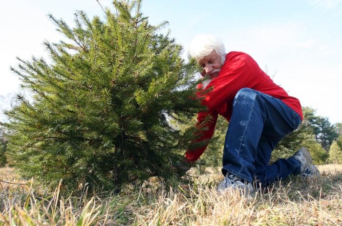 Tree Farm113069273.jpg