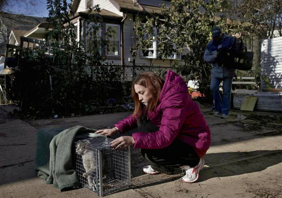 In Sandy aftermath, pets' fates bring comfort or stress