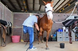 Horses helping heroes: Equine therapy helps veterans adjust, heal from war injuries
