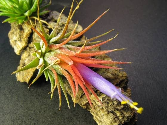 Air Plants Easy To Grow Hard To Kill Living