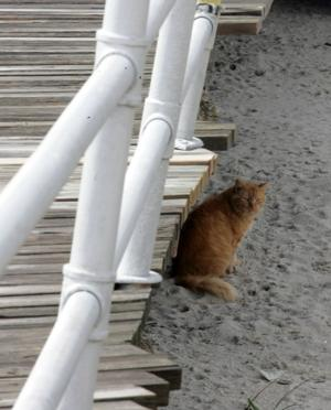 boardwalk cats