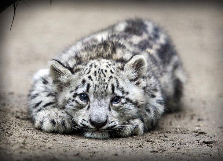Zoo Babies