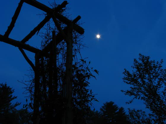 Moonlight adds a different hue to the everyday garden