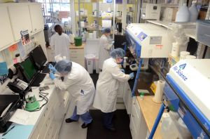 Compound: Lab technicians working in the lab at Jersey Shore Pharmacy, in Egg Harbor Township. The Jersey Shore Pharmacy, in Egg Harbor Township, specializes in preparing compounds for patients.The state plans to beef up regulations over compounding pharmacies after contaminated medicine from a compounding pharmacy in Massachusetts killed dozens of people and sickened hundreds more. Thursday, January, 24, 2013( Press of Atlantic City/ Danny Drake)  - Photo by Danny Drake