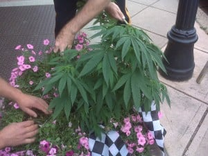 Pot plants