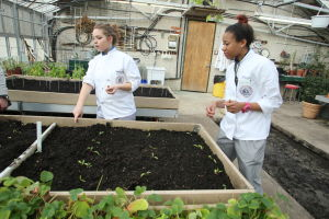 GREEN EDUCATION: Somer Gegeckas, 19, of Mount Royal, left and Akeema Telemaque, 21 of Willingboro, right students working in greenhouse at Atlantic Cape Community College Thursday, Feb 20, 2014. - Edward Lea