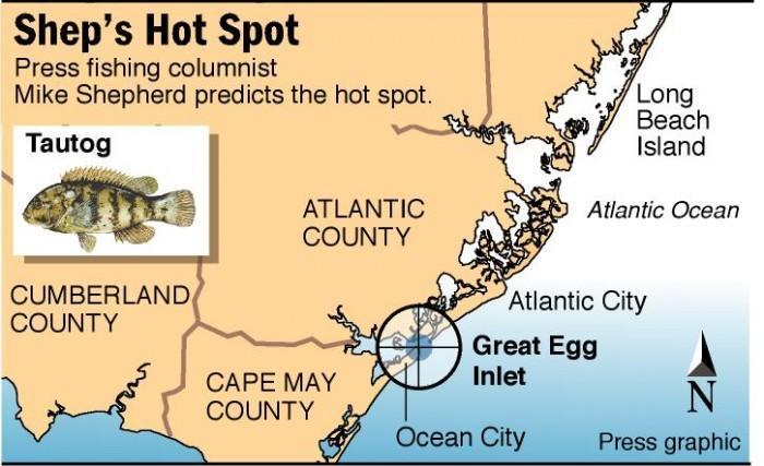 hot spot tautog