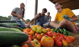 Growing Good WorksVolunteers Maintain School Gardens Despite Being On Summer Vacation: Stockton College students Allie Glasser, of Galloway Township, left, Keith Mulligan, of Tabernacle, and Liz Burnham, of Moorestown, package shares of the harvest at Stockton's garden, which is really more of a mini-farm.