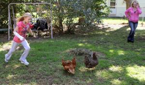 Chickens77510016.jpg