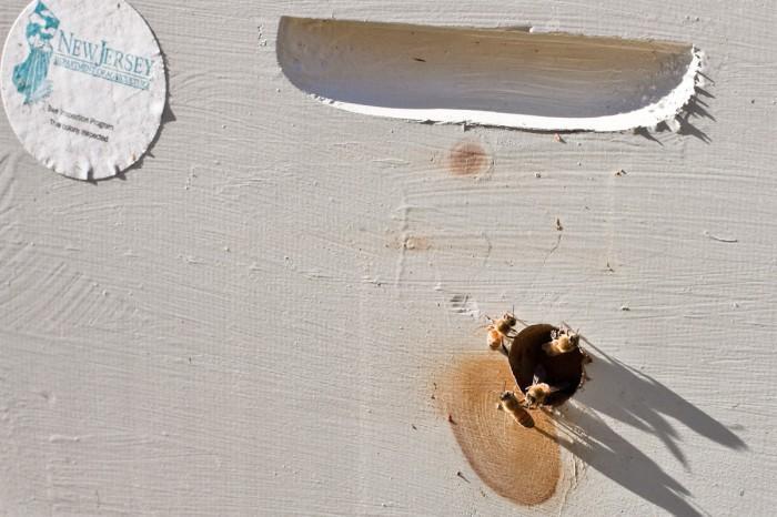 beekeeping112924805.jpg