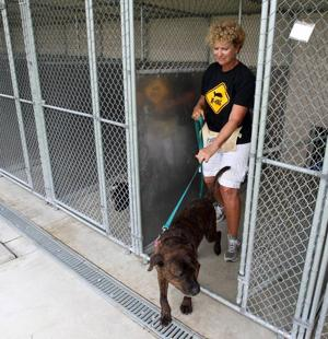 Aiding animal sheltersVolunteers are responsible for everything from cleaning cages to helping train dogs