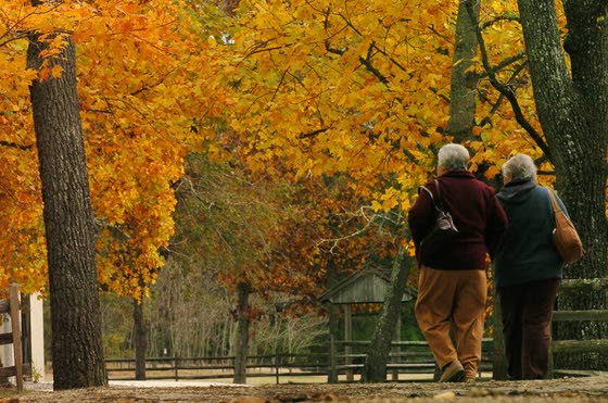 No need to leave southern N.J. to enjoy a colorful display of fall foliage